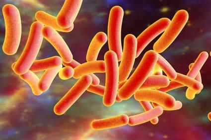 Bacterium Legionella pneumophila